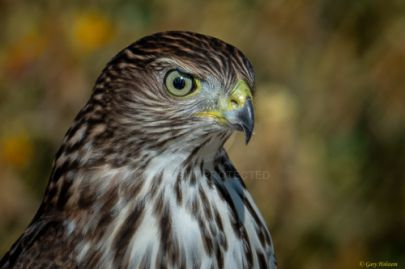 Mile Square Park - Hawk